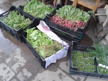 Erstes frisches Gemüse in 2017